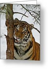 Tiger 3 Greeting Card by Ernie Echols