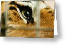 Tiger Behind Bars Greeting Card by Melody Watson