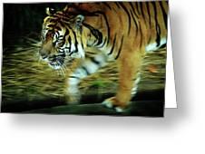 Tiger Burning Bright Greeting Card by Rebecca Sherman