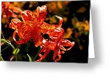 Tiger Lilies Greeting Card by Rona Black