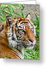 Tiger Portrait Greeting Card by Jennie Marie Schell