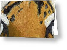 Tigers Eye Greeting Card by Laurie Bath