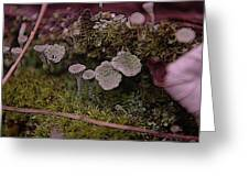 Tiny Mushrooms  Greeting Card by Jeff  Swan