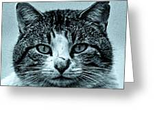 Tom Cat Greeting Card by Tony Grider