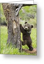 Too Cute For Words Greeting Card by Melody Watson