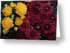 Touch Of Fall Greeting Card by Evelyn Patrick