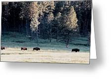 Trail Of Bulls Greeting Card by Jan Amiss Photography