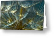 Translucid Dandelions Greeting Card by Iris Greenwell