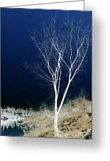 Tree By Stream I Greeting Card by Stuart Turnbull