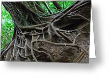 Tree from Manoa Falls Greeting Card by Elizabeth Hoskinson