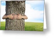 Tree Hugger 2 Greeting Card by Brandon Tabiolo - Printscapes