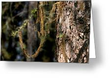 Tree Moss - Green Soft Beauty Greeting Card by Christine Till