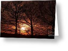 Trees At Sunset Greeting Card by Michal Boubin