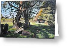 Trees Near Rhug. Greeting Card by Harry Robertson