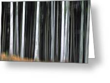 Trees trunks Greeting Card by BERNARD JAUBERT