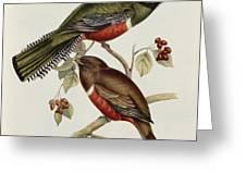 Trogon Collaris Greeting Card by John Gould