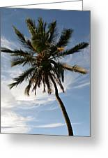 Tropical Coconut Palm Tree Maui Hawaii Greeting Card by Pierre Leclerc Photography