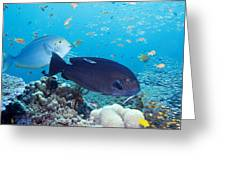Tropical Reef Fish Greeting Card by Georgette Douwma