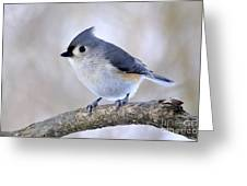 Tufted Titmouse On Dogwood 2 Greeting Card by Thomas R Fletcher