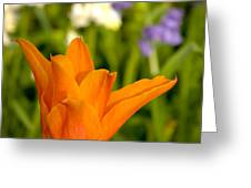 Tulip And Friends Sq Greeting Card by Andy Smy