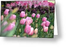 Tulip Dreams Greeting Card by Louise Magno