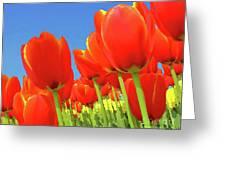 Tulip Field Greeting Card by Giancarlo Liguori