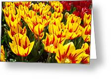 Tulip Flowers Festival Yellow Red Art Prints Tulips Greeting Card by Baslee Troutman