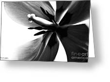 Tulip In Black And White Greeting Card by Jayne Logan Intveld