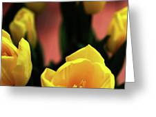 Tulips Greeting Card by Matt Truiano