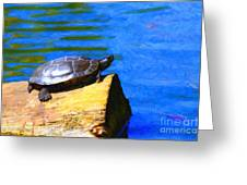 Turtle Basking In The Sun Greeting Card by Wingsdomain Art and Photography