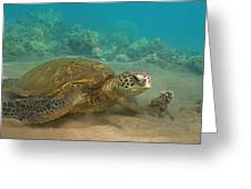 Turtle Magic Greeting Card by Brian Governale