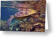 Turtle Reflections Greeting Card by Bette Phelan