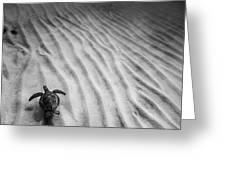 Turtle Ridge Greeting Card by Sean Davey