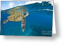 Turtle Taking A Breath Greeting Card by Dave Fleetham - Printscapes