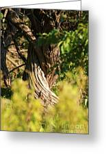 Twisted Tree Greeting Card by Alan Look