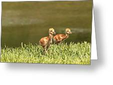 Two Chicks Greeting Card by Carol Groenen