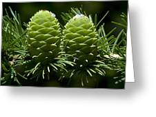Two Pinecones Greeting Card by Svetlana Sewell