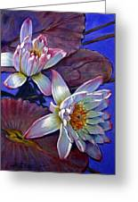 Two Pink Water Lilies Greeting Card by John Lautermilch