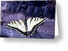 Two Tail Swallowtail Greeting Card by Chris Gudger