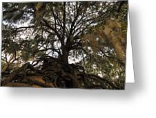 Under Spanish Moss Greeting Card by David Lee Thompson