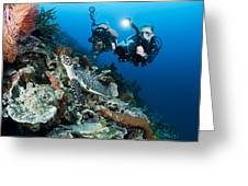Underwater Photography Greeting Card by Dave Fleetham - Printscapes