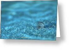 Underwater Seashell - Jersey Shore Greeting Card by Angie Tirado