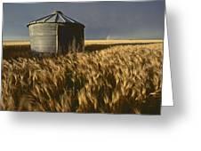 United States, Kansas Wheat Field Greeting Card by Keenpress