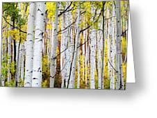 Uphill Greeting Card by The Forests Edge Photography - Diane Sandoval