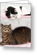 Upstairs Downstairs With Emmy And Pepper Greeting Card by Andee Design