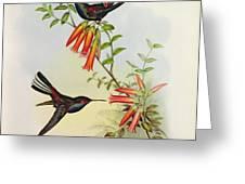 Urochroa Bougieri Greeting Card by John Gould