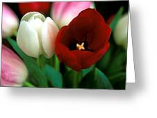 Valentine Tulips Greeting Card by Kathy Yates