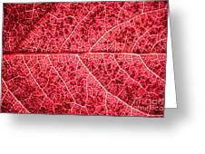 Veins In A Red Autumn Leaf Greeting Card by Ryan Kelly