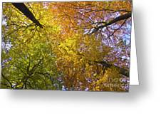 View To The Top Of Beech Trees Greeting Card by Heiko Koehrer-Wagner