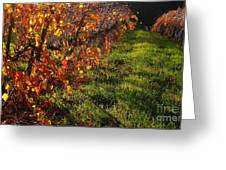 Vineyard 13 Greeting Card by Xueling Zou